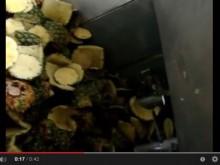 パイナップルの皮 粗粉砕機 現場動画