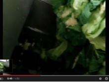 キャベツの粗粉砕機 現場動画