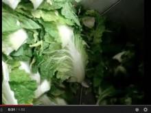 白菜 粗粉砕機の現場動画