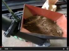 Fe石灰処理土の45度 パイプ型スクリュー搬送テスト